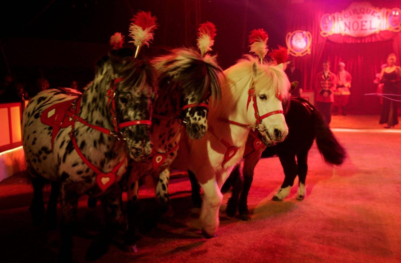 Cirque de Noël Christiane Bouglione (goûter)